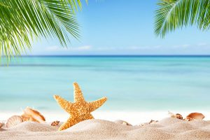 Tropical beach with various shells in sand, copyspace for text. Concept of summr relaxation